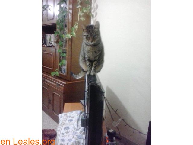 Lo que pide mi gato a los Reyes Magos