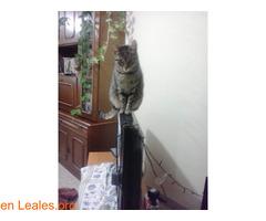 Lo que pide mi gato a los Reyes Magos - Imagen 1