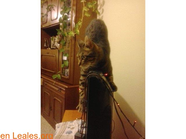 Lo que pide mi gato a los Reyes Magos - 2