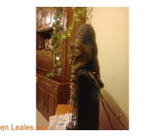 Lo que pide mi gato a los Reyes Magos - Imagen 2