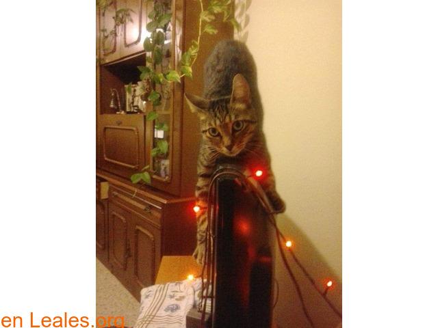 Lo que pide mi gato a los Reyes Magos - 3