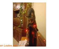 Lo que pide mi gato a los Reyes Magos - Imagen 3