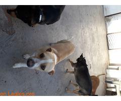 Perros ratoneros - Imagen 1