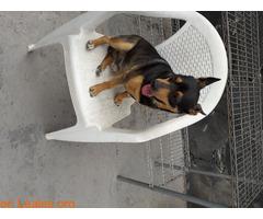 Perros ratoneros - Imagen 2