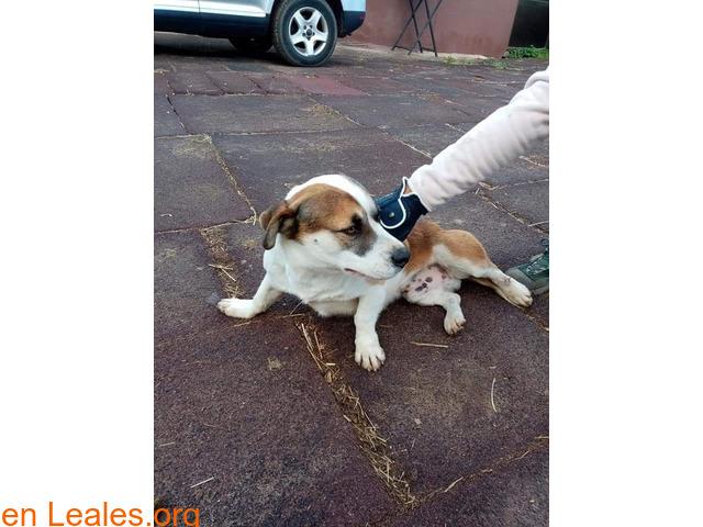 Perro adulto, cariñoso y sociable