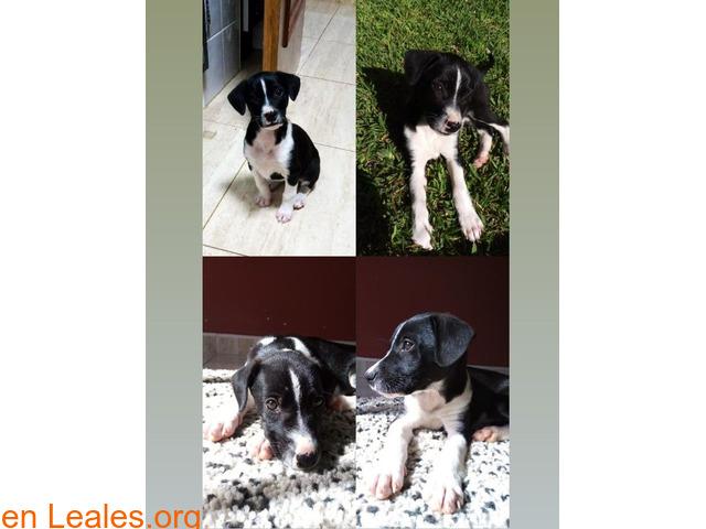 Cachorrita en adopción en Tenerife