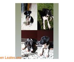Cachorrita en adopción en Tenerife - Imagen 1