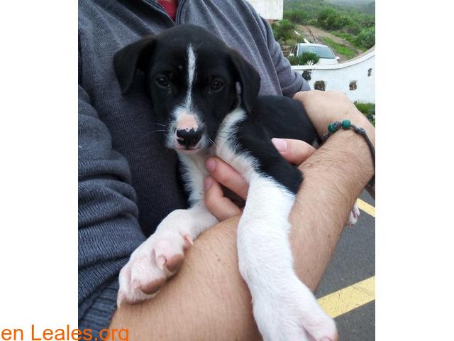 Cachorrita en adopción en Tenerife - 2