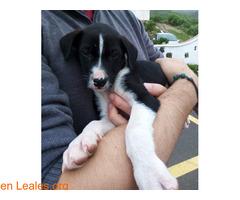 Cachorrita en adopción en Tenerife - Imagen 2