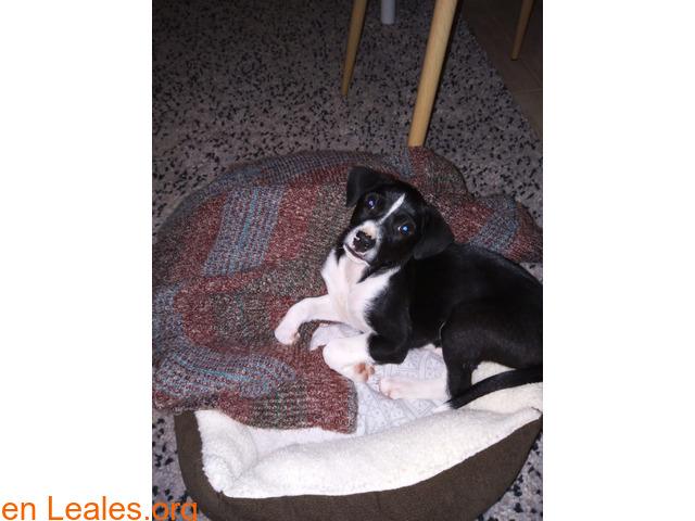 Cachorrita en adopción en Tenerife - 3