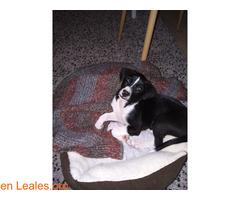 Cachorrita en adopción en Tenerife - Imagen 3