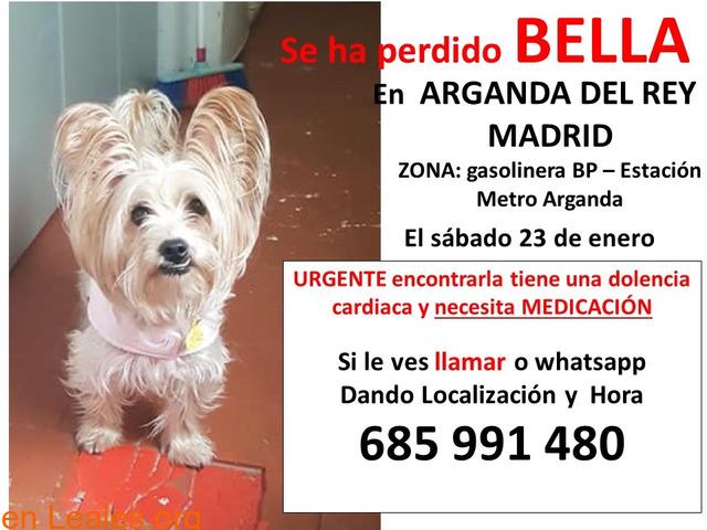 """BUSCANDO DESESPERADAMENTE A """"BELLA"""""""