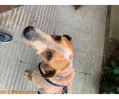 Encontrado perro e gava mar el 12/02/21 - Imagen 1