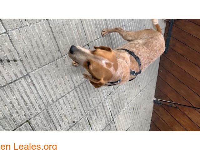 Encontrado perro e gava mar el 12/02/21 - 2