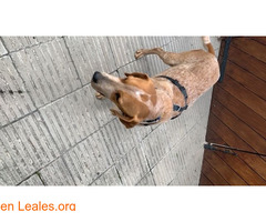 Encontrado perro e gava mar el 12/02/21 - Imagen 2