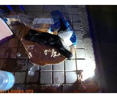 Tiraron un baifito vivo en la basura - Imagen 1