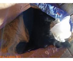 Tiraron un baifito vivo en la basura - Imagen 2