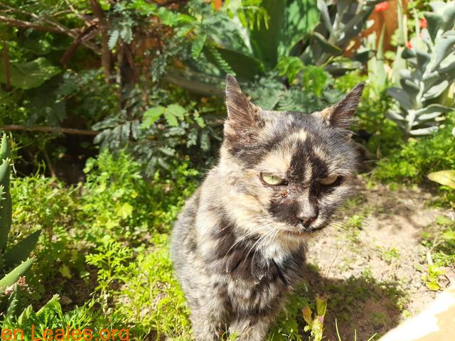 A Lucero le pegan otros gatos