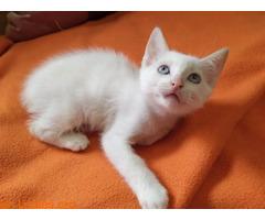 Maow divertida gatita en busca de hogar. - Imagen 2