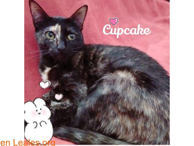 Cupcake para familia muuy cariñosas
