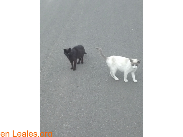 Busco protectora de gatos - 1