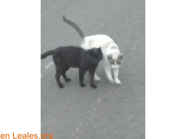 Busco protectora de gatos - 2