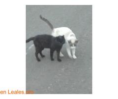 Busco protectora de gatos - Imagen 2