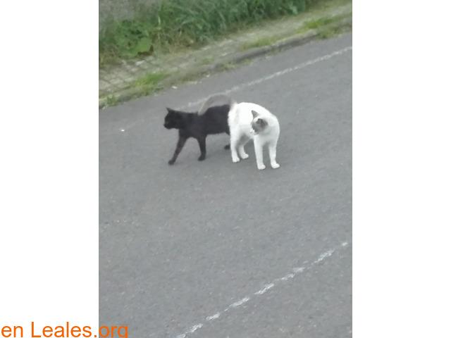 Busco protectora de gatos - 3