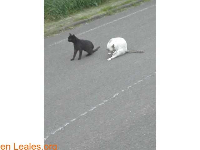 Busco protectora de gatos - 4