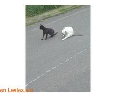 Busco protectora de gatos - Imagen 4