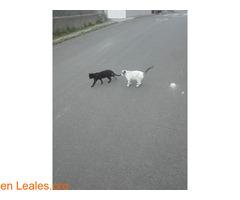 Busco protectora de gatos - Imagen 5