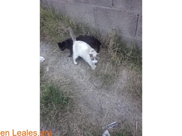 Busco protectora de gatos - 6