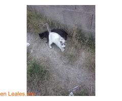 Busco protectora de gatos - Imagen 6