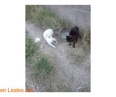 Busco protectora de gatos - Imagen 7