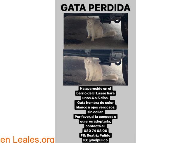 URGENTE GATITA BLANCA ENCONTRADA