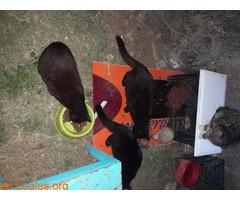 La importancia de castrar a los gatos... - Imagen 2