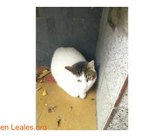 Gato recogido. - Imagen 1