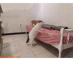 Gato recogido. - Imagen 2