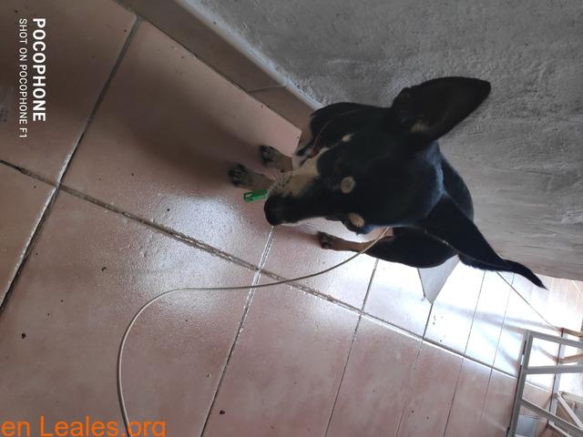 Perro encontrado en real de San Juan las - 2