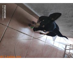 Perro encontrado en real de San Juan las - Imagen 2
