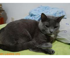 Adopción para Bruno, un gato Especial - Imagen 1