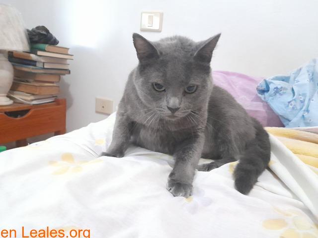 Adopción para Bruno, un gato Especial - 2