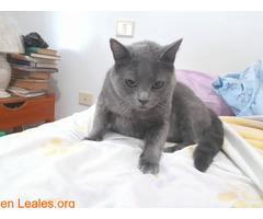 Adopción para Bruno, un gato Especial - Imagen 2