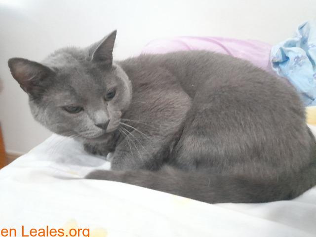 Adopción para Bruno, un gato Especial - 4