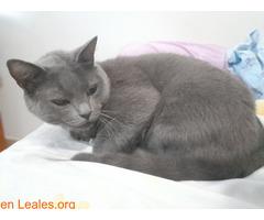 Adopción para Bruno, un gato Especial - Imagen 4