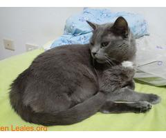 Adopción para Bruno, un gato Especial - Imagen 5