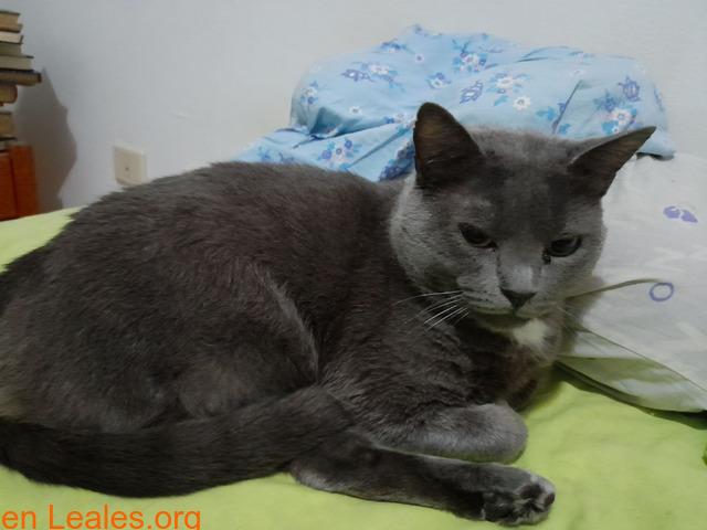 Adopción para Bruno, un gato Especial - 6