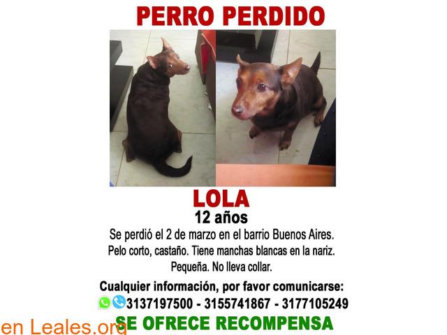 LOLA (Perra perdida en El Cerrito) - 2