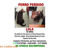 LOLA (Perra perdida en El Cerrito) - Imagen 2