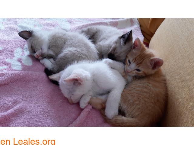 Gatitos ya adoptados - 1